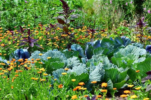 Plantas amigas: Consorciação de culturas