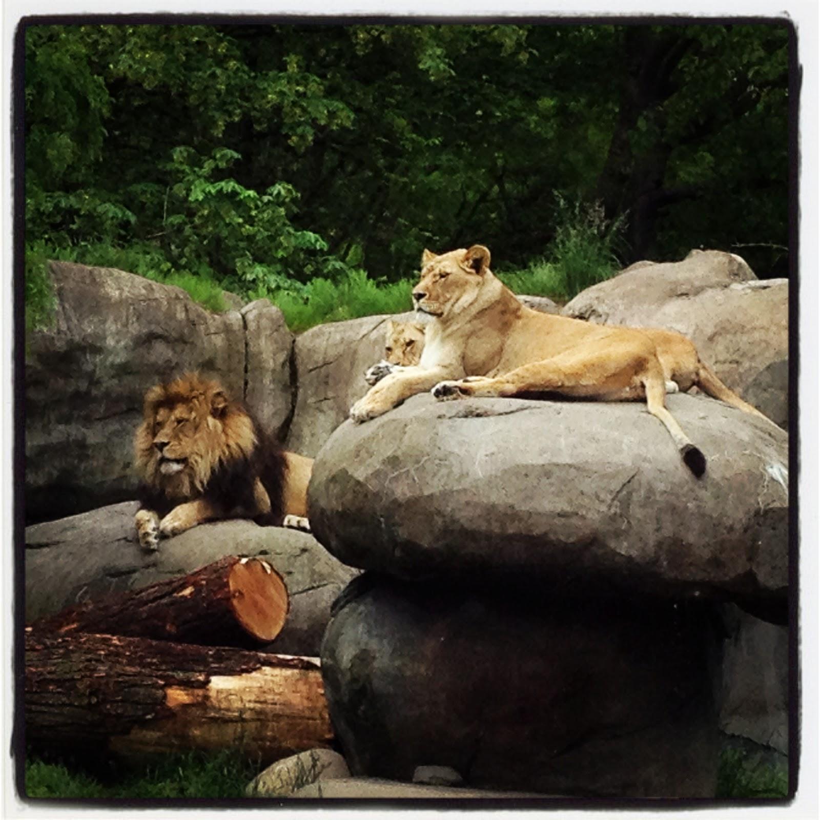 video portland zoo - HD1600×1600