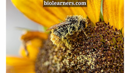 Pollination | Self pollination and cross pollination | Examples of pollination flowers