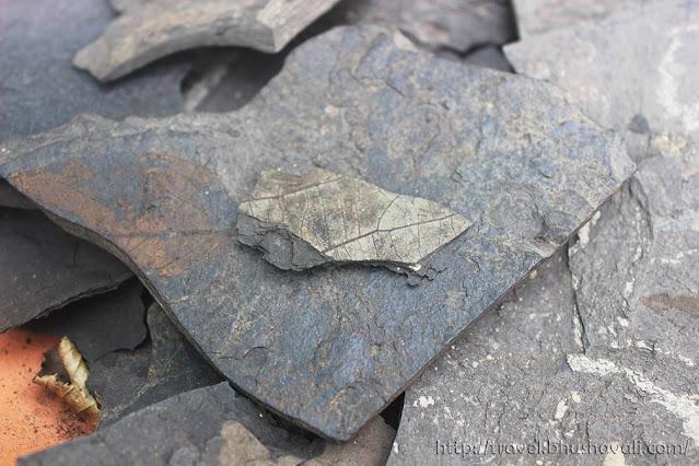 Grube Messel Pit Fossilized Leaf