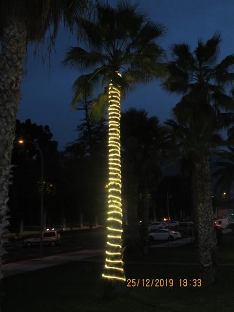 überall auf der Insel wurden natürlich auch die Palmen schön dekoriert!