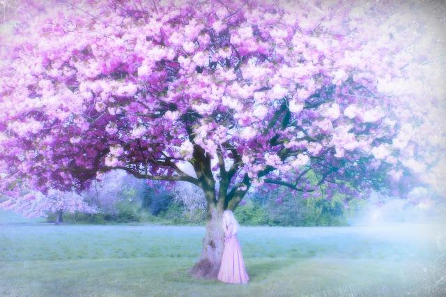 cherry blossom peckham