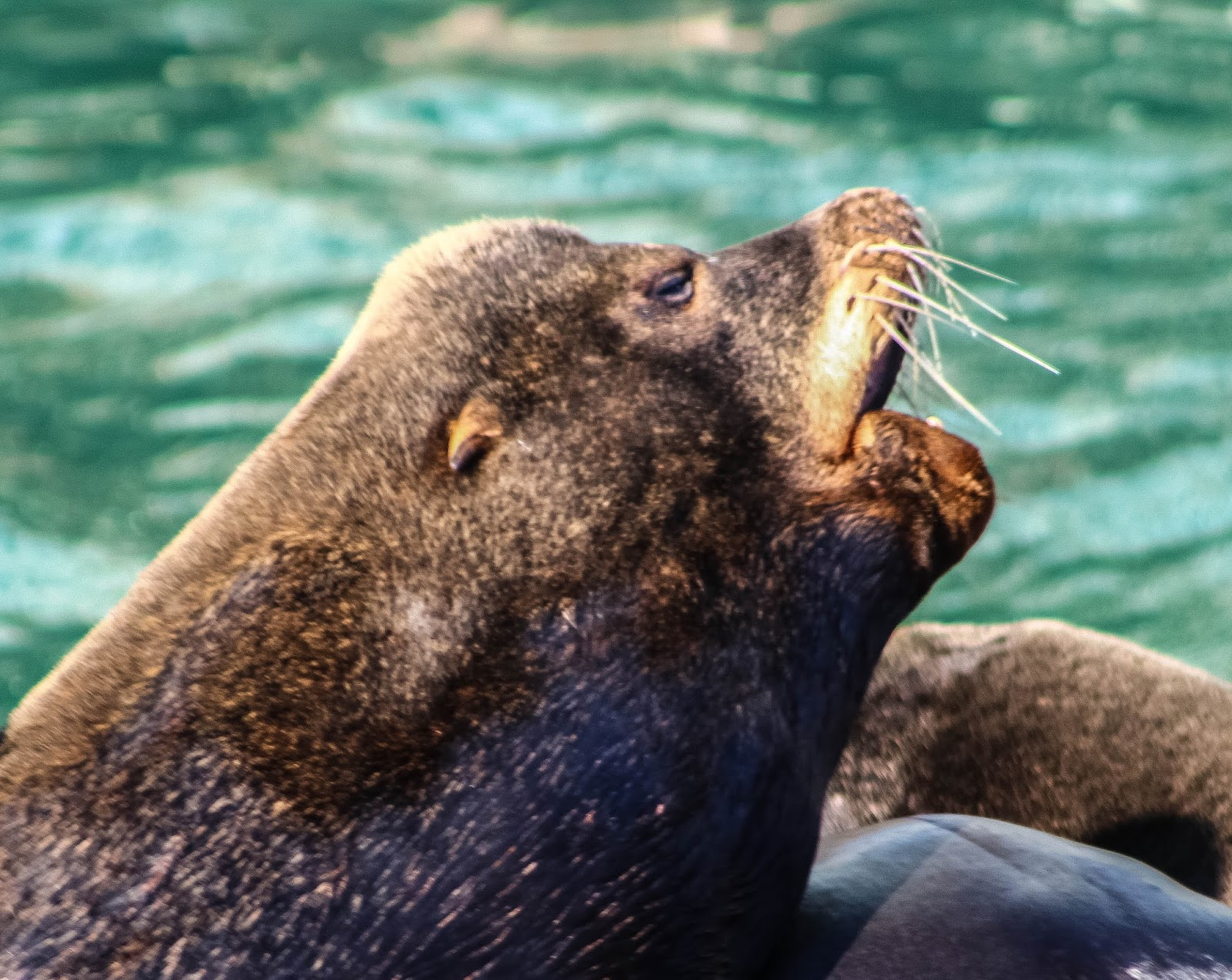 Cannundrums: California Sea Lion
