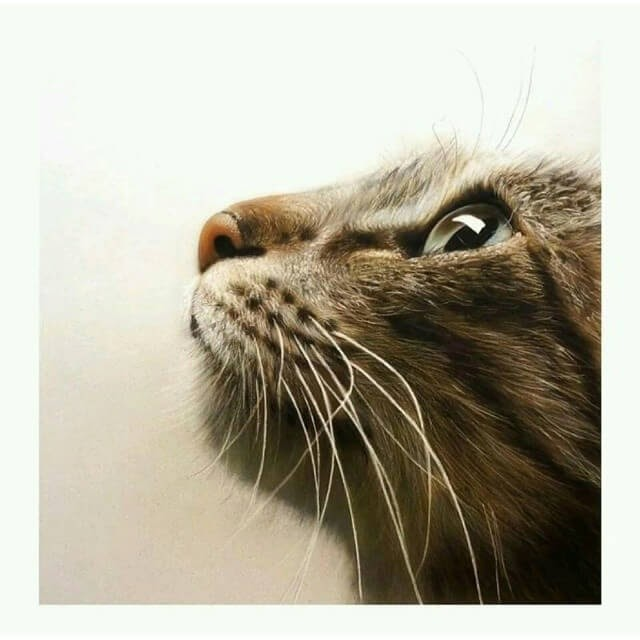 10-Cat-M-Oosterlee-Realistic-Airbrush-Animal-Paintings-www-designstack-co