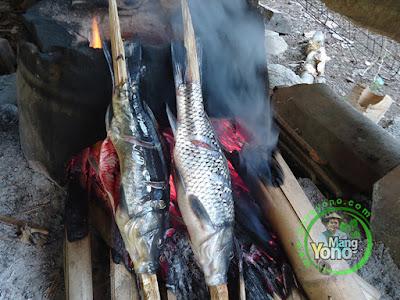 Bakar Ikan sambil Siduru hareupeun hawu