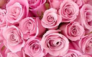 Rose Rosa bunga mawar - berbagaireviews.com