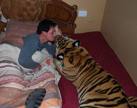 Pets bizarros - Tigre