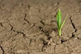 Kendala Pertanian Hidroponik