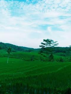 pemandangan-lahan-kampung-kurma