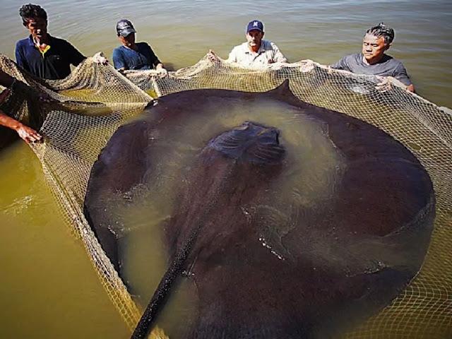 Hewan laut terbesar