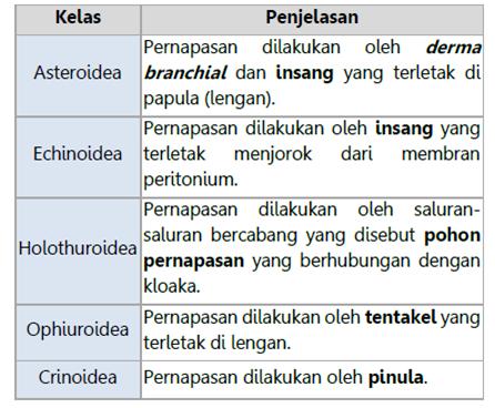 Sistem Pernapasan Echinodermata