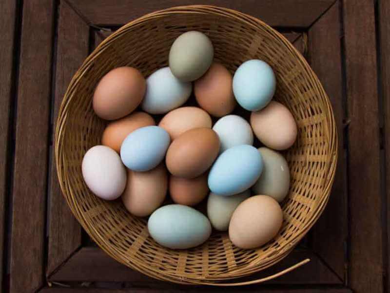 Bahaya telur expired