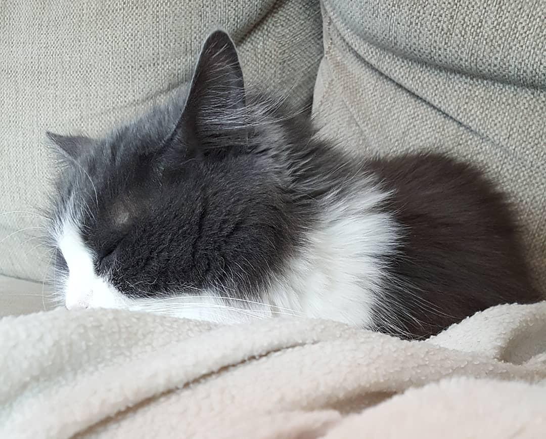 micu-the-cat