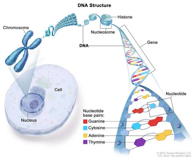 Pertanyaan - pertanyaan Mengenai DNA