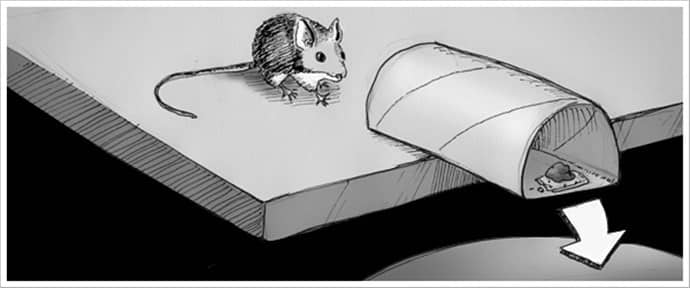 Pratik Rulo Tuzağı fare yakalama yöntemleri