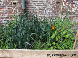 ecologisch tuinieren, moestuin, moestuinweetjes, wisselteelt, combinatieteelt, triënnale brugge, triennale brugge, moestuinbak, ecohuis