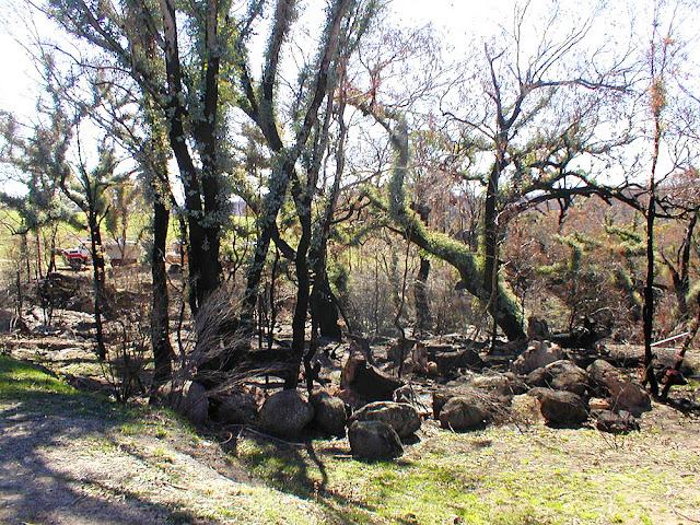 Bushfire damage, 2003, ACT, Australia. Photo by Loire Valley Time Travel.