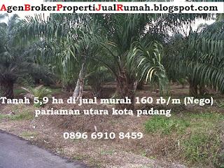 Jual murah tanah 5,9 ha 150 rb/mtr di kota padang