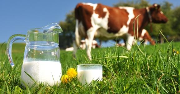 susu lembu segar untuk ibu mengandung