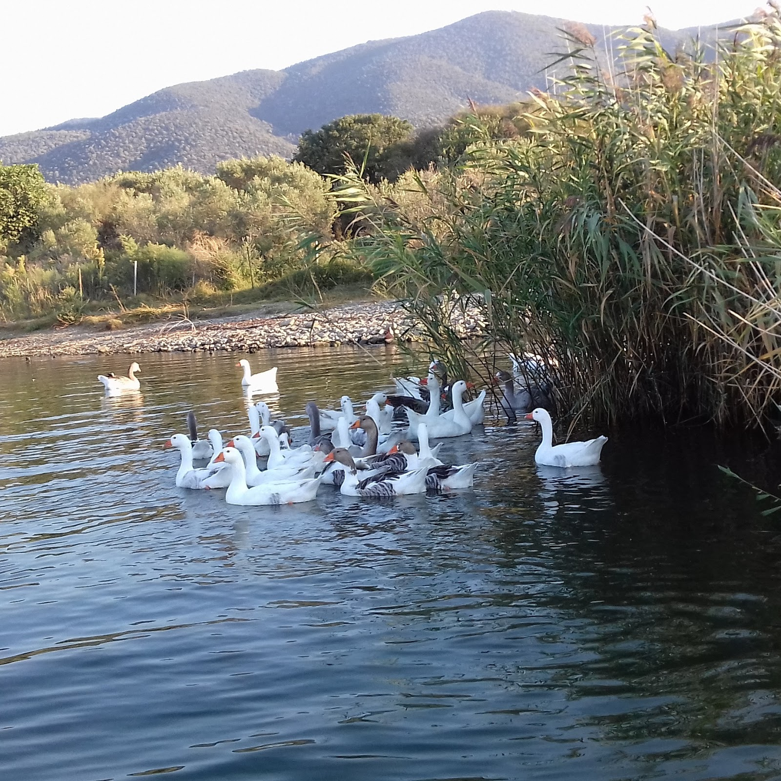 Float Fishing and not only, in Greece.: Λίμνη Βόλβη..