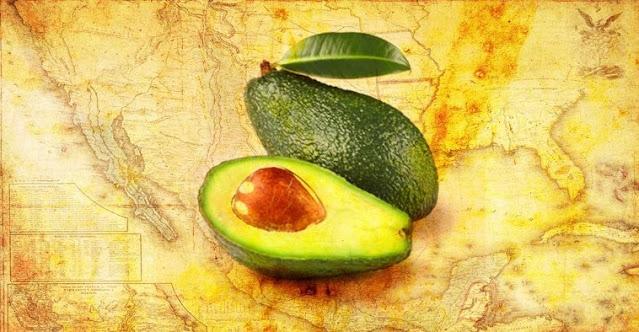 The History of Avocado