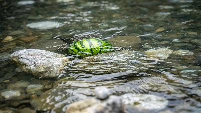川で冷やされるスイカ
