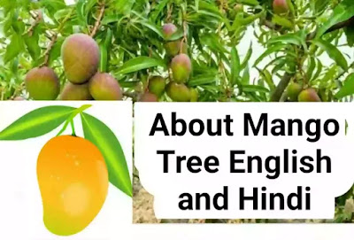 5 Sentences About Mango Tree in English
