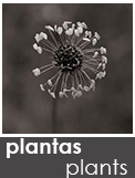 https://albumdeinstantes.blogspot.com/p/plantas_22.html