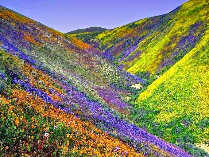 Valley of Flower, Uttarakhand