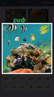 под водой риф над которым плавают цветные рыбки и кораллы рядом