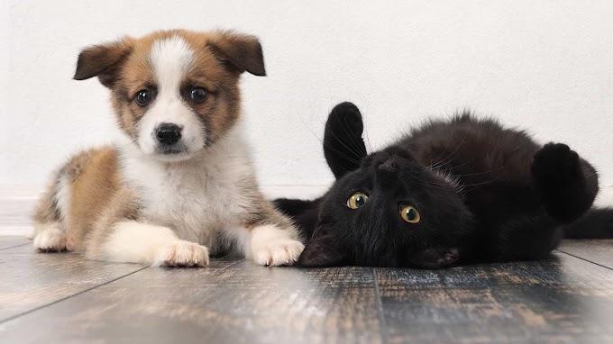 Cães e gatos: Dicas para acalmar o seu animal nas festas de Ano Novo