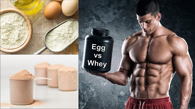 Whey Protein vs Egg Protein - Which is better ?