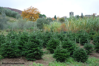 Happy Christmas Trees view towards Castelvecchio in Tuscany