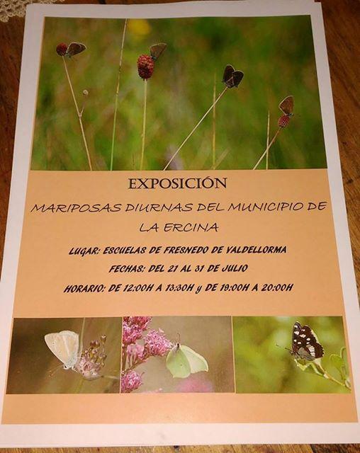 Exposición sobre las mariposas diurnas del municipio de La Ercina