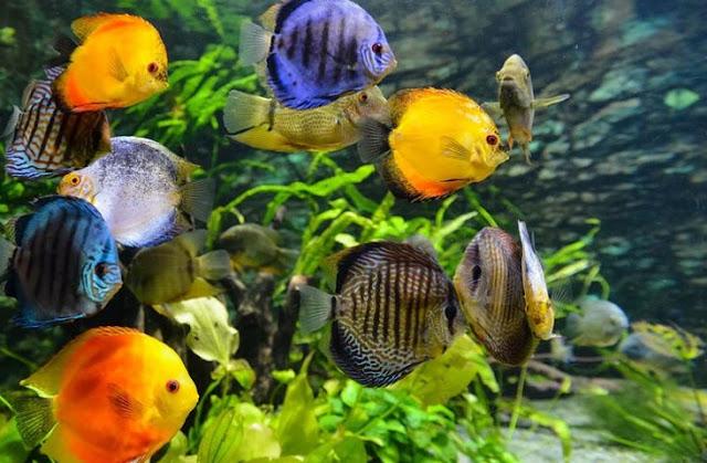 Cara membuat aquascape tema natural dan aquascape tanpa ...