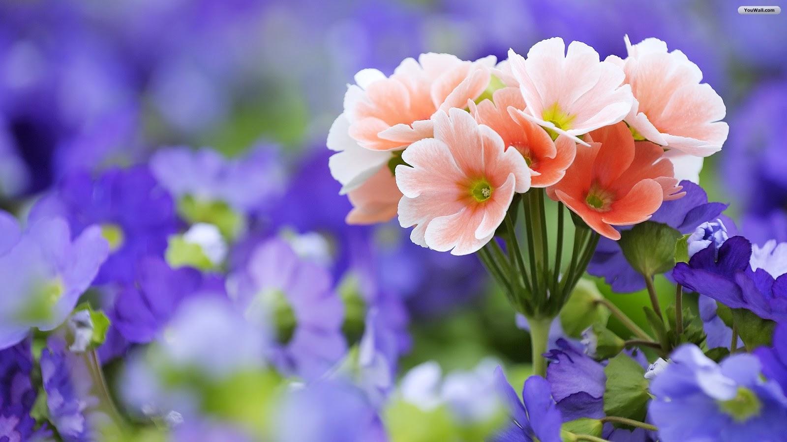 Flowers For Flower Lovers Desktop Beautiful Flowers Hd