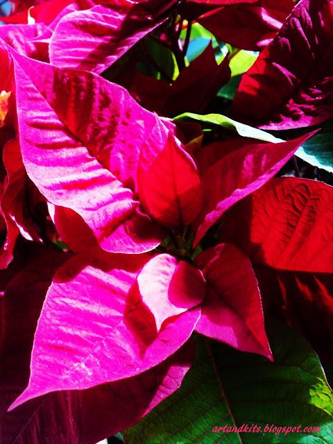 Já se respira Natal, um pouco por todo o lado!... Que este nos lembre, o amor e interesse pelas pessoas... e não tanto, pelas coisas... /We already breathe Christmas, everywhere!... May it remind us, love and interest for others... and not so much, for things...
