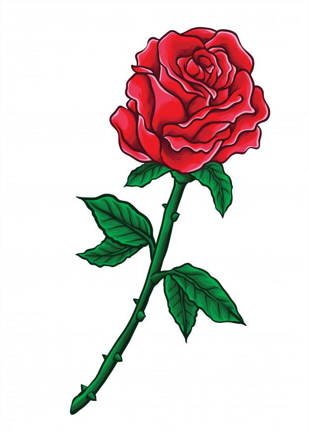 Mawar Logo : mawar, Kumpulan, Gambar, Bunga, Mawar, Gambariku