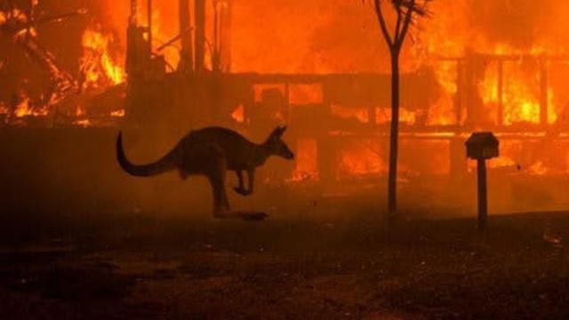 Jutaan dolar AS donasi kebakaran hutan Australia terkumpul di Facebook