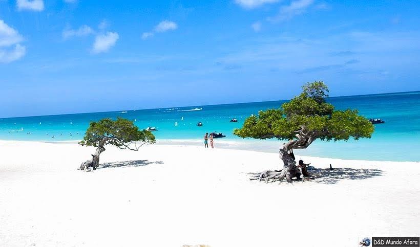Divi-Divi Tree - Eagle Beach: Praias de Aruba, Caribe