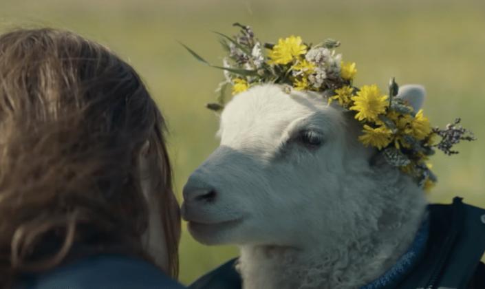 Imagem: uma mulher com cabelos castanhos de costas perto de um carneiro branco com uma coroa de flores sobre a sua cabeça e o corpo numa jaqueta jeans, e ao fundo, uma colina de grama verde.
