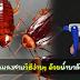 กำจัดแมลงสาบวิธีง่ายๆ ด้วยน้ำยาล้างจาน