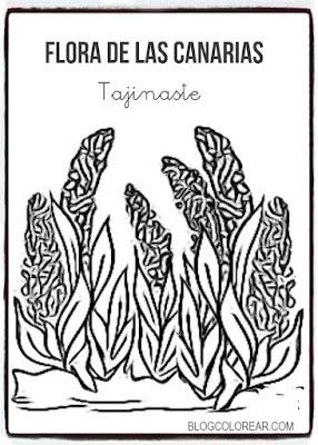 Colorear dibujo de Tajinaste canario