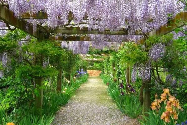 10 plantas trepadoras para cubrir p rgolas o cenadores for Arboles para jardin que den sombra