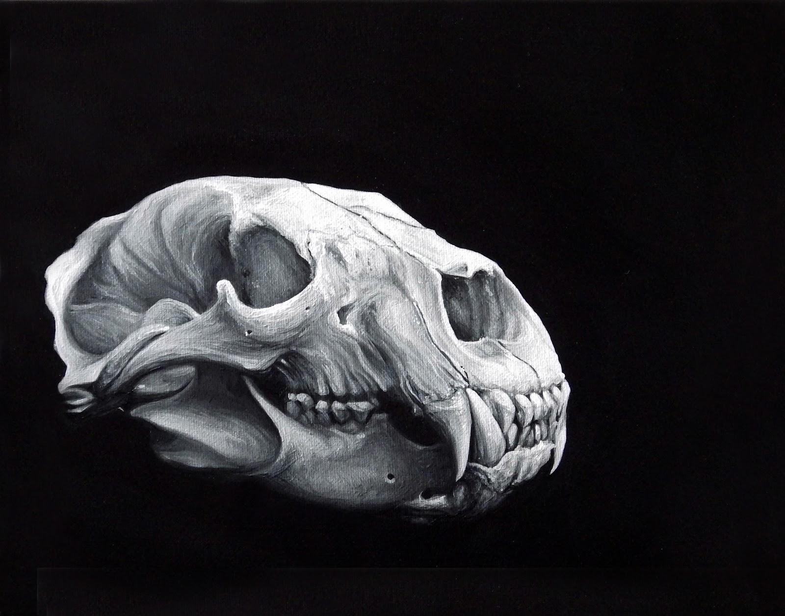 Social Filter: Bear Skull Study