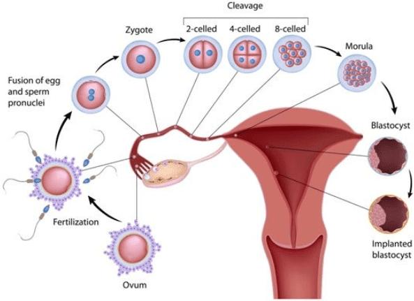 manfaatkan masa subur agar cepat hamil setelah kb