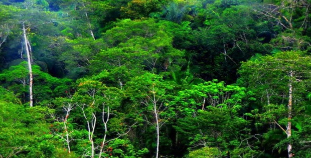 Ketampakan Alam Indoensia