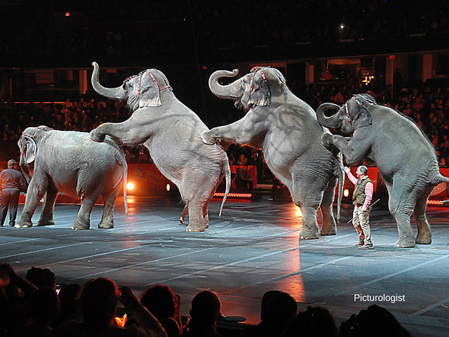 Elephants at Ringling Bros and Barnum and Bailey Circus Xtreme photo by K., Johnson, Picturologist