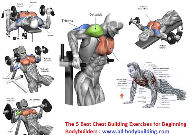The 5 Best Chest Building Exercises for Beginning ...