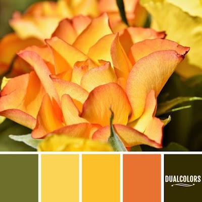Color Paleta 15
